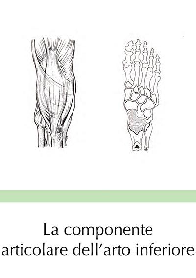 La componente articolare dell'arto inferiore