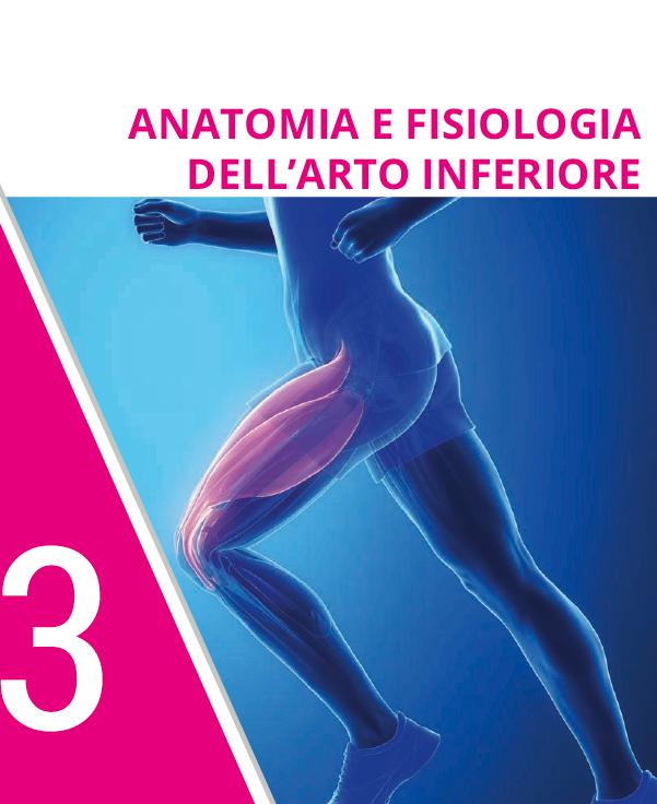 ANATOMIA E FISIOLOGIA DELL'ARTO INFERIORE